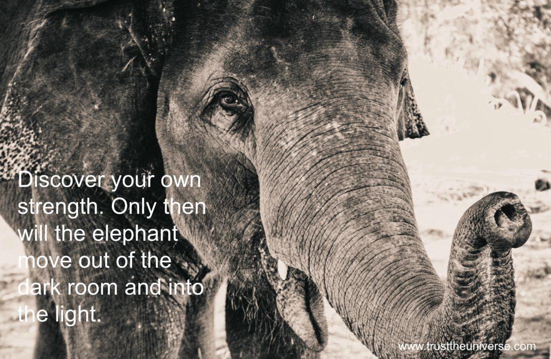 elephants, www.trusttheuniverse.com