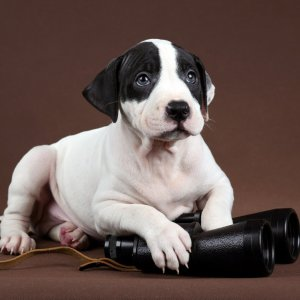 trademark search puppy