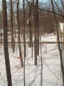 Yoel's Snow