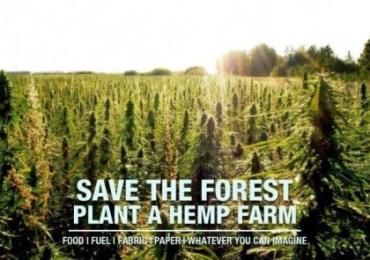 Farmers Begin Planting Hemp Under New Colorado Hemp Legalization.
