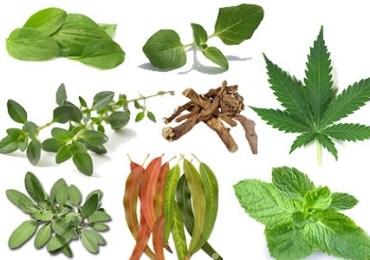15_herbs