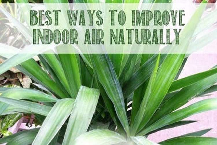 Air-Purification-Best-Plants-to-Grow-Indoors