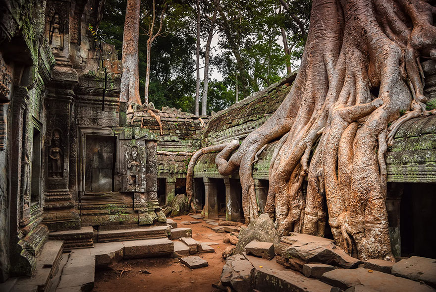 The roots of trees are expanded inside the Angkor Wat temple in Cambodia