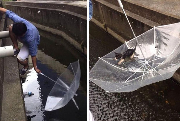 A man saves a kitten from drowning with his umbrella.