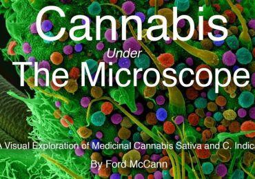 cannabis under the microscope