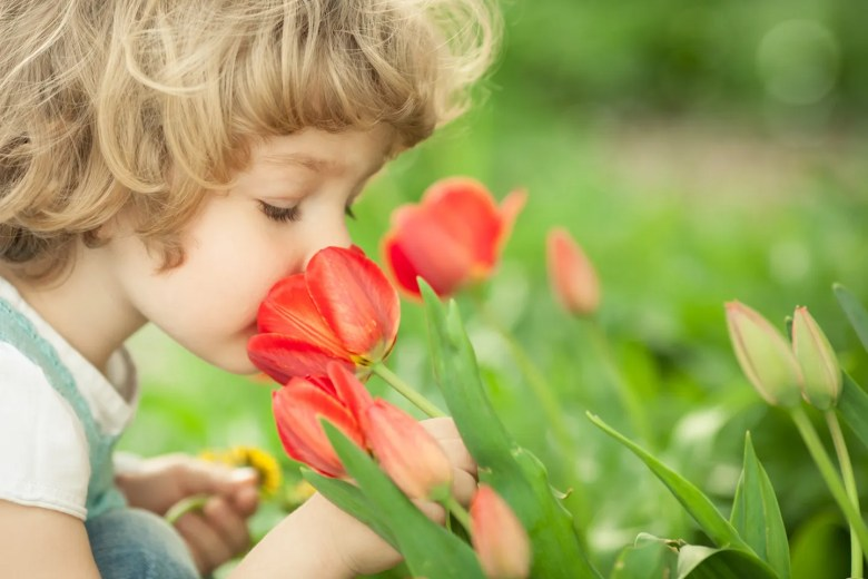 Child smelling tulip flower in spring outdoors