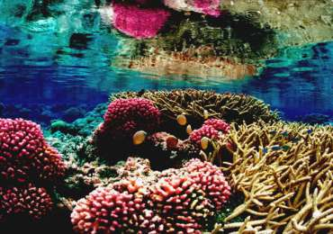 Persian Gulf's Coral Reefs
