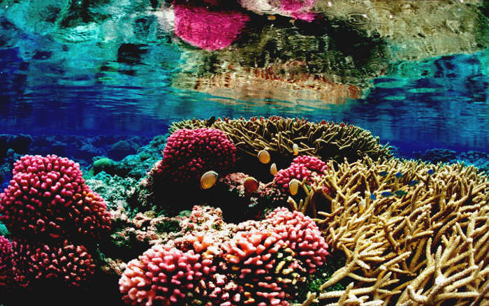 persian coral reef's