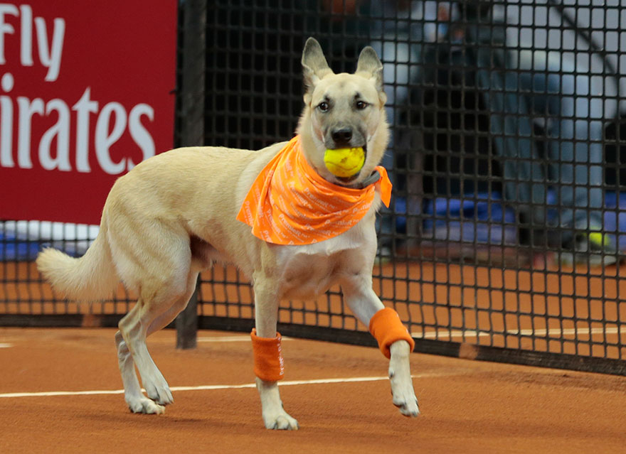Brazil Open Tennis Tournament-ball-dogs-5