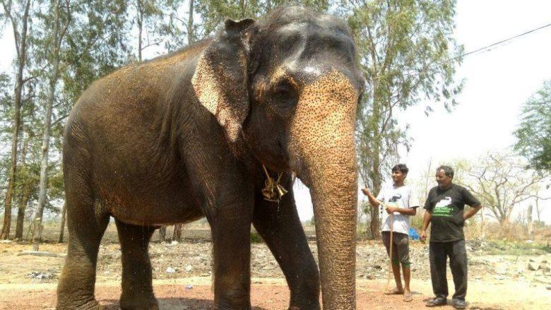 Rhea the elephant (2)
