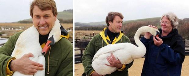 swan hugs man 5