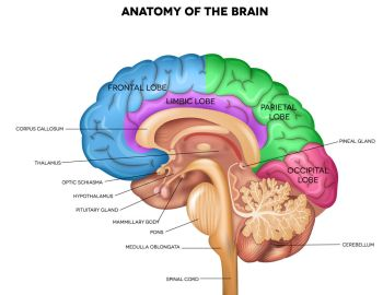 man-missing-most-of-his-brain-challenges-everything-we-thought-we-knew-about-consciousness-3