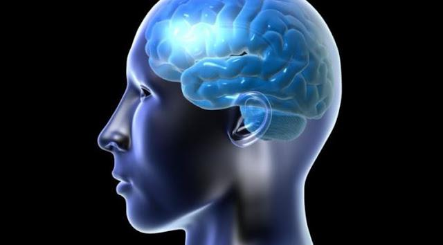 brain dopaminee