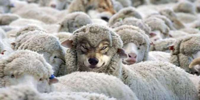 Some Ways to Identify a Wolf in Sheep's Clothing – Truth Inside Of You