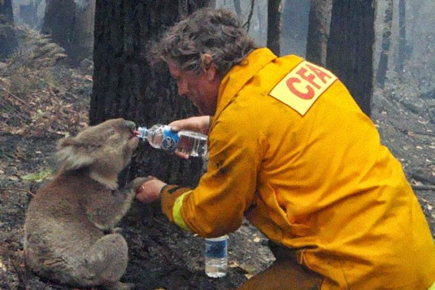 30 of the most powerful images of all time - A firefighter gives water to a koala