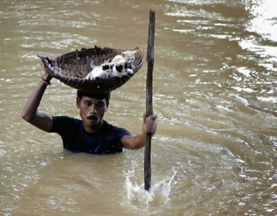 30 of the most powerful images of all time - During massive floods in Cuttack City, India, in 2011, a heroic villager saved numerous stray cats
