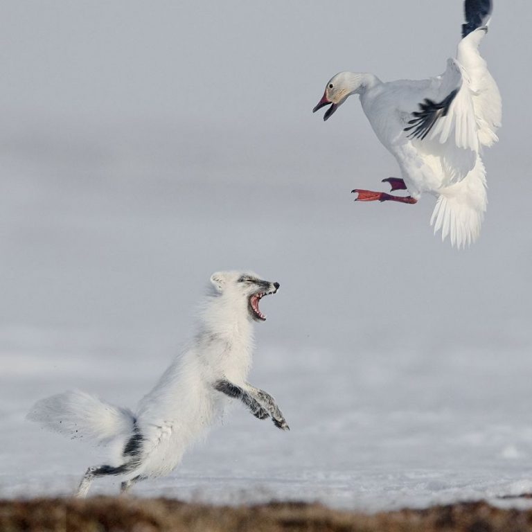 Attack of Sergey Gorshkov