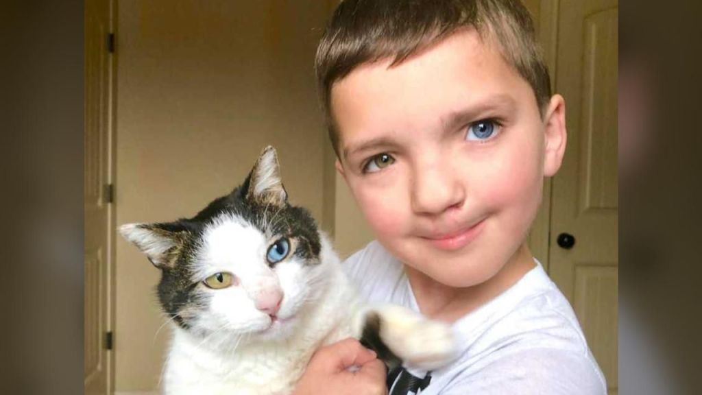 Bullied Boy Adopts Rescue Cat with Same Rare Eye Condition and Cleft Lip - 1