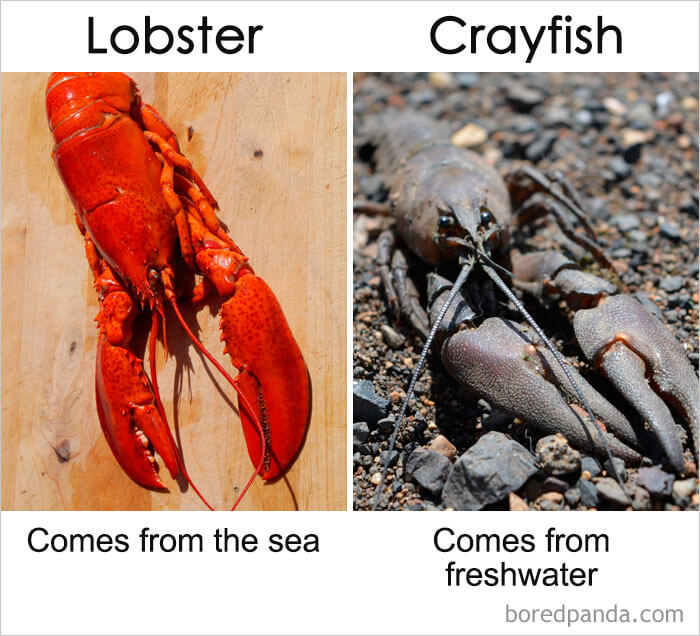 17. Lobster vs Crayfish