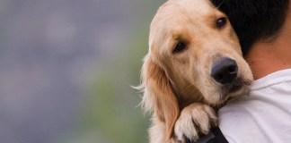Benefits of Pet Ownership