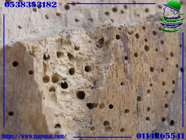 حشرة السوس الخشب, حشرة السوس الخشب, شركة المركز العالمي