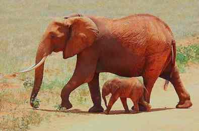 Eléphants Safaris Tsavo Ouest en camp Kenya de Diani 2jours