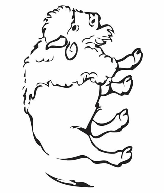 Bison Head Coloring Page
