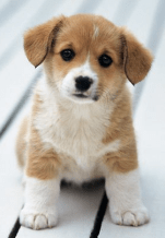 Thrift Savings Plan puppy