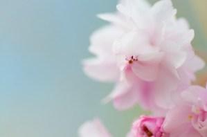 大阪開催! 5/11(土)「自由に生きる!どうしても人生に突破口を作りたい人のためのファーストステップセミナー」開催!No Second Lifeセミナー14 です!!