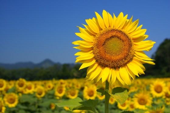 [雑記] ブログの夏休み