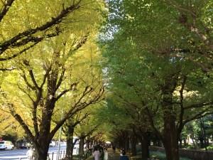 久々の昼ラン!神宮外苑の紅葉がきれいだった13kmラン!今週は48km走りました!  [富士山マラソンまで9日・ランニング日誌]