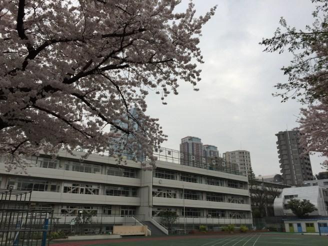 4月はたくさん走ろう!桜満開の中早朝5kmラン!! [ランログ]