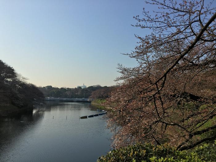 桜を追いかけてアークヒルズ 〜 皇居 〜 千鳥ケ淵 早朝12kmラン!! [ランログ]