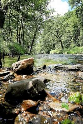 View of Valley Creek in Valley Forge National Historical Park Friday, June 6. (Gene Walsh/The Times Herald)
