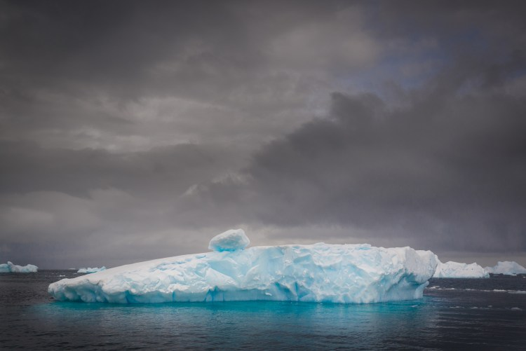 Contemplating Icebergs in Antarctica