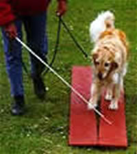 A tellington ttouch wand helps guide dogs and creates an extension of your arm