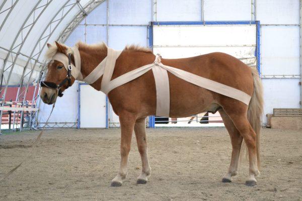 Tellington TTouch Body Wraps for horses