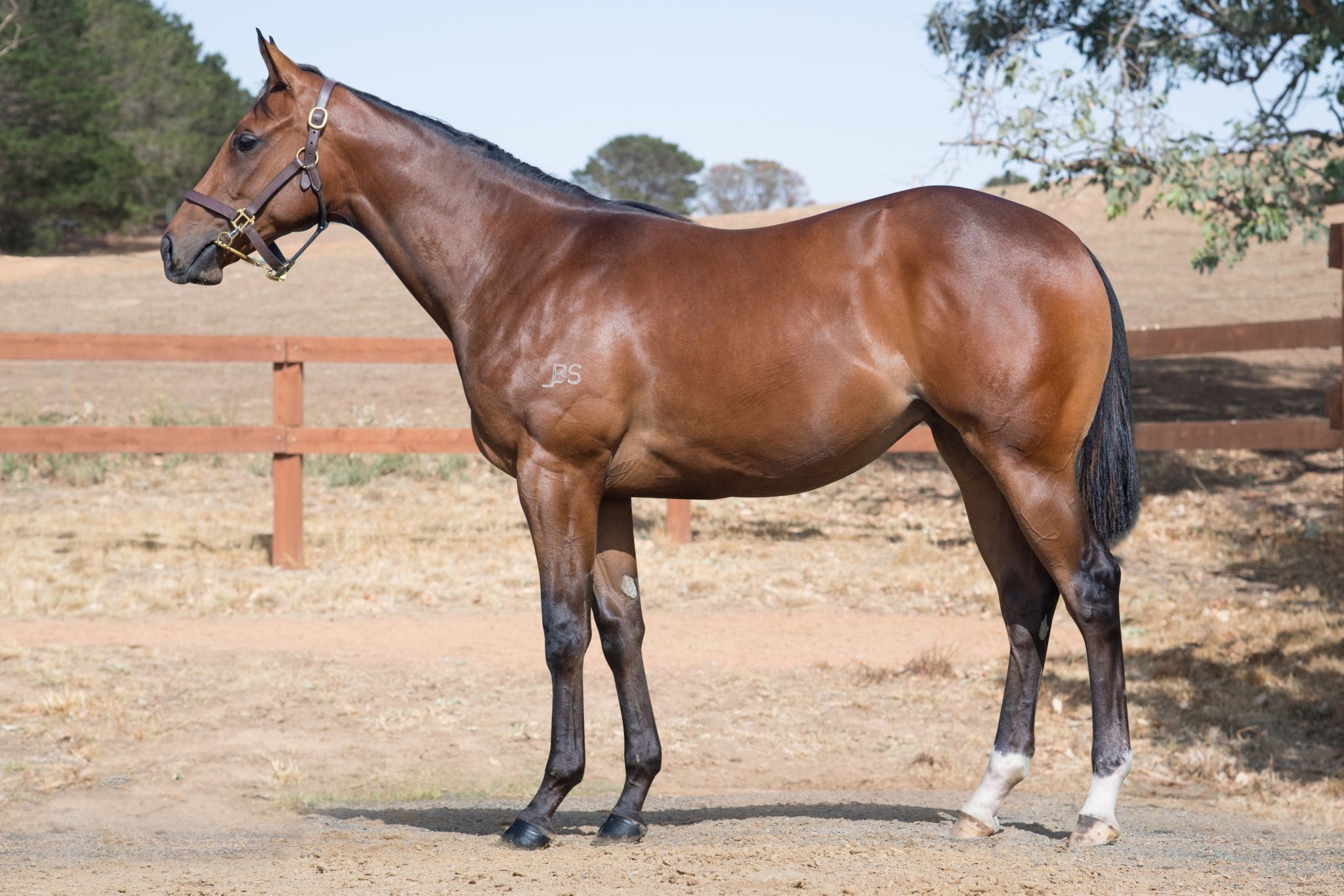 Filly To Freedman Brothers'