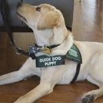 Another Guide Dog Trainee Joining Red Raider Family