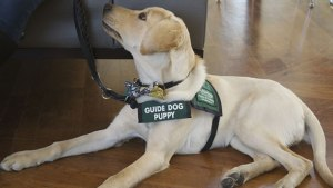 Guide_Dog_1