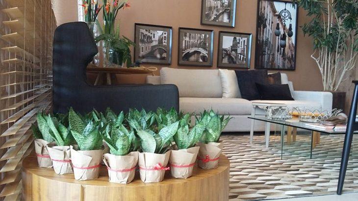 Espadadesojorge como plantar cuidar e inserir na decorao fotos