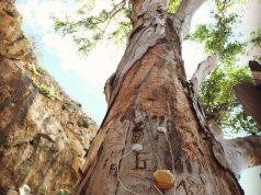 alberi di roma