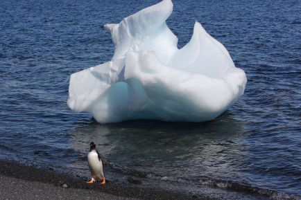 penguin and ice Antarctica