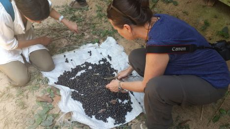 Sorting acai berries