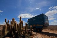 andes cacti