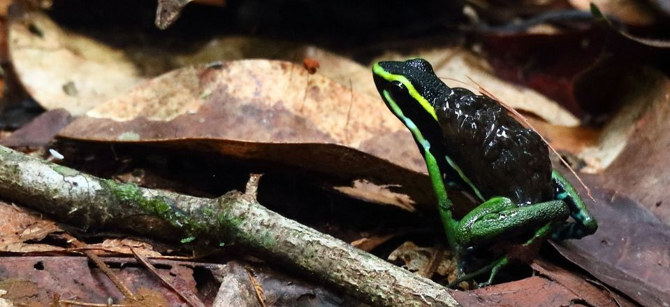 Suriname jungle blog - critters you find on the ground