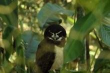 owl yanacocha animal refuge