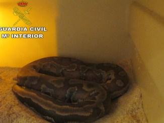 La serpiente se encontraba a cargo de un familiar residente en la localidad de l'Eliana.