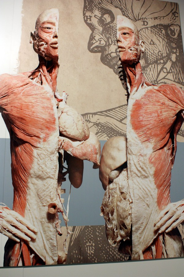 Comments ' Peek Under Skin 'bodies' Exhibit'