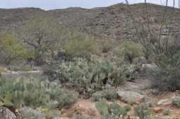 Tucson's desert